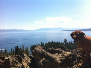 Search Dog Lake Tahoe View