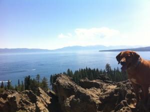 Search Dog Lake Tahoe View