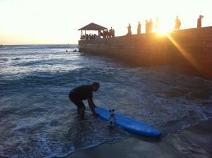 Surfing Dog In Hawaii