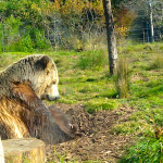 A Bear Market Checklist To Surviving A Downturn