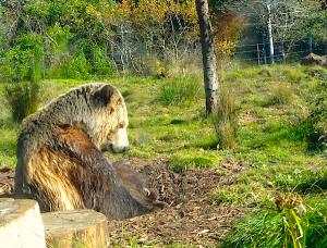 Sleepy Bear by Financial Samurai