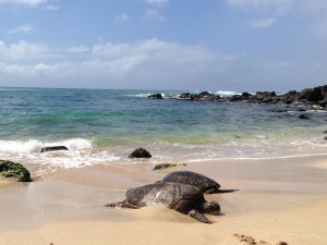 Barclaycard Arrival World Mastercard Sea Turtles