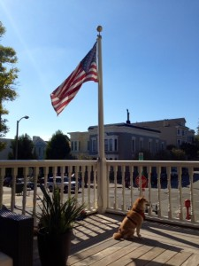 Patriotic dog and US flag