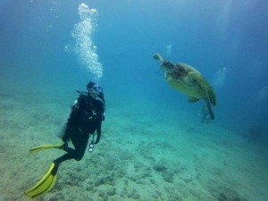 Scuba diving with turtle in Hawaii