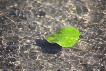 Financial Samurai Passive Income Update 2015 - 2016 - Leaf On River by Kathy Kettner Creative Commons