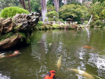 Zen Garden Sanctuary