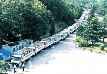 Trucks of cattle DMZ