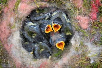 Divorce after kids: Bird nesting as the key for stability