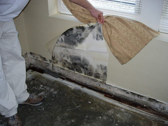Black mold damage is bad for you